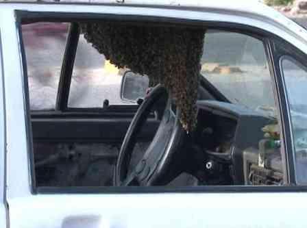 carros_abelha